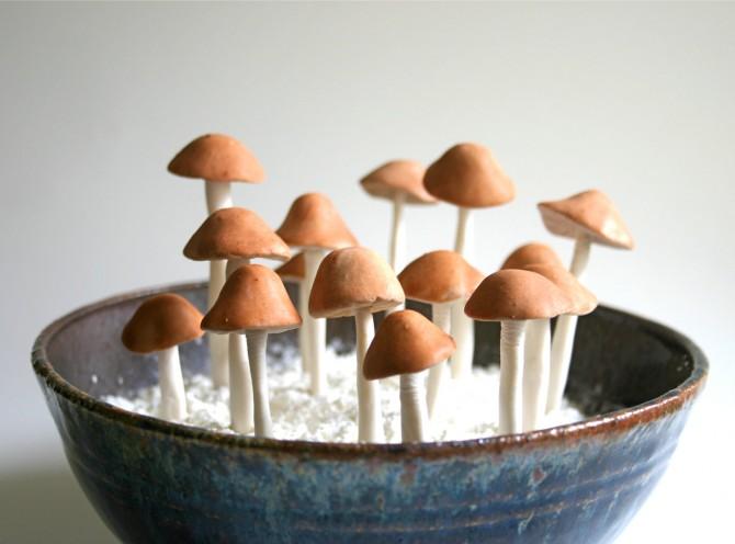cogumelos1