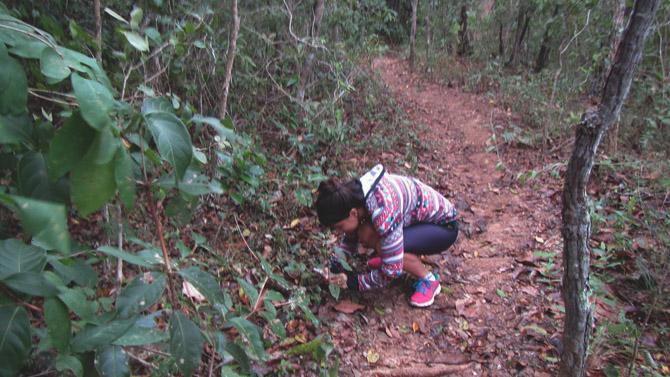 Fotografando os cogumelos pelo caminho para espantar o mal humor